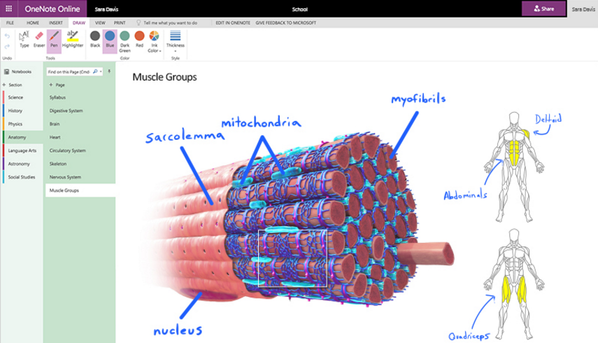 Example of OneNote Digital Ink in practice showing how it can be used to annotate an image