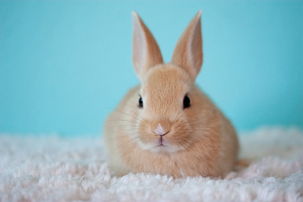 A picture of a rabbit sitting on a blanket